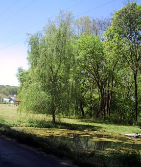 05willow-pond